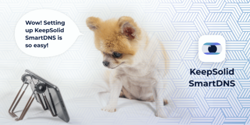 Pomeranian dog watching Netflix on smartphone on the bed with KeepSolid SmartDNS app